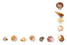 Seashell Half Frame on White Background Royalty Free Stock Image
