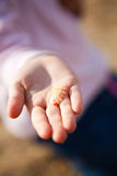 Seashell in hand Royalty Free Stock Photos