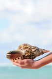 Seashell in hand Stock Image