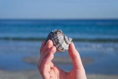 Seashell in hand. On a background of blue sea Royalty Free Stock Image