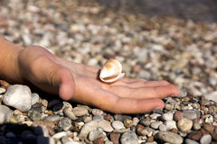 Seashell in hand. White seashell on the palm of the sea stock photos
