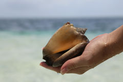 Seashell. In the hands of the girl against the sea Royalty Free Stock Photography