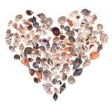 Seashell heart Royalty Free Stock Image