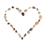 Seashell heart Royalty Free Stock Photography