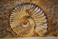 Seashell hermoso Imágenes de archivo libres de regalías