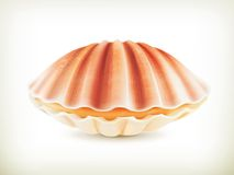 Seashell, high quality illustration Stock Photo