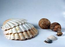 Seashell i jabłka ślimaczek łuska inkasowego białego tło Obrazy Royalty Free