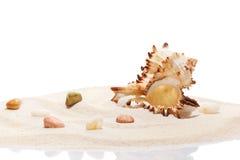Seashell i morza kamienie na stosie plażowy piasek Obrazy Royalty Free