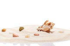 Seashell i morza kamienie na stosie plażowy piasek Obraz Royalty Free