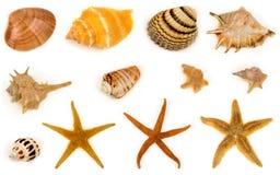 Seashell i rozgwiazda Zdjęcie Stock