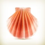 Seashell icon Royalty Free Stock Photography
