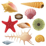 Seashell icons. Bright highly detailed seashell icons vector illustration
