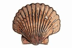 Seashell illustration Royalty Free Stock Photos