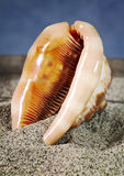 Seashell inner part on sand Royalty Free Stock Image