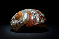 Seashell isolated on black background Royalty Free Stock Photo