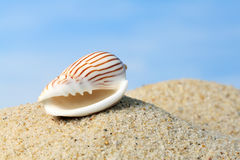 Seashell Isolated On Blue Royalty Free Stock Images