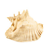 Seashell isolated over the white Royalty Free Stock Photo