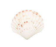 Seashell isolated on white Royalty Free Stock Photos