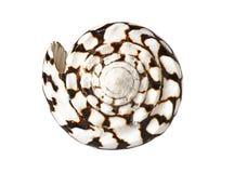Seashell isolato su bianco fotografie stock libere da diritti