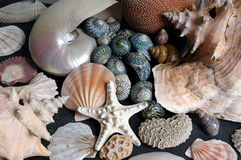 Seashell Jumble. Seashells piled together Stock Photo