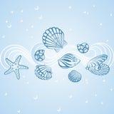 Seashell karta Zdjęcia Stock