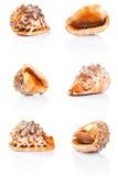 Seashell kolekcja zdjęcie stock