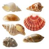 Seashell kolekcja Fotografia Royalty Free