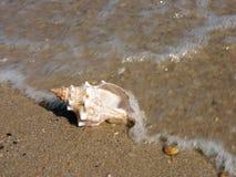 Seashell lavé à terre photo stock