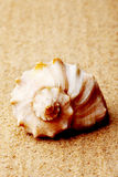 Seashell lies on the sand Stock Image