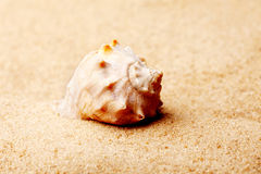 Seashell lies on the sand in sunlight Stock Photography