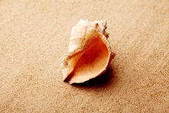 Seashell lies on the smooth and flat sand Stock Photography