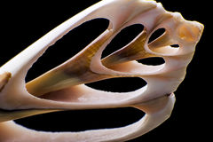 Seashell macro detail Stock Photo