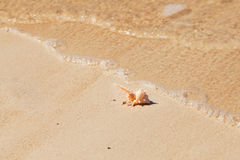 Seashell macro view on sand beach Royalty Free Stock Image