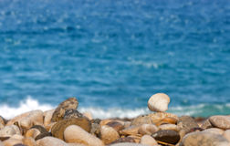 Seashell macro view with waves background Royalty Free Stock Photos