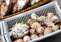 Seashell market Royalty Free Stock Image