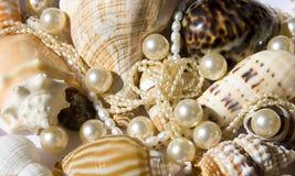 Seashell mit Perlen Stockfotos