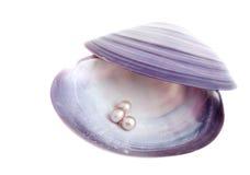 Seashell mit Perlen Lizenzfreies Stockbild