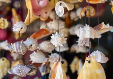 seashell mobile wind chime handcraft Royalty Free Stock Image
