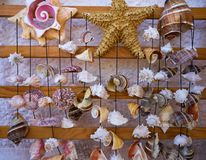 Seashell mobile wind chime hanging mexico. Seashell mobile wind chime hanging handcraft souvenir from mexico Royalty Free Stock Photos