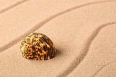 Seashell mollusk on the beach sand. Concept for summer vacation royalty free stock photo