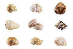 Seashell mosaic collection Royalty Free Stock Photography