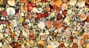 Seashell mozaika  Obrazy Royalty Free