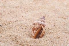 Seashell na areia Imagens de Stock Royalty Free