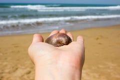 Seashell na kobiety r?ce z dennym widokiem obrazy stock