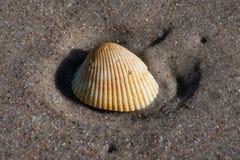 Seashell na piaskowatej plaży zdjęcia royalty free