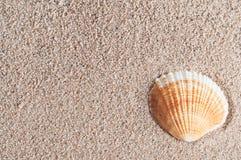 Seashell na piasku Fotografia Stock