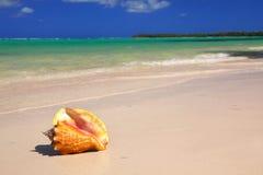 Seashell na praia fotos de stock