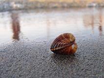Seashell na praia fotos de stock royalty free