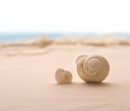 Seashell na praia Imagens de Stock