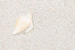 Seashell puro no Sandy Beach Fotos de Stock